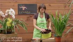 Les conseils vid o de les serres du maupas duclair page 1 - Comment garder une orchidee ...